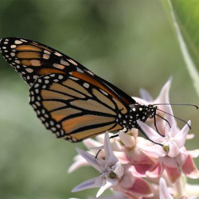 Projects - Pollinator garden