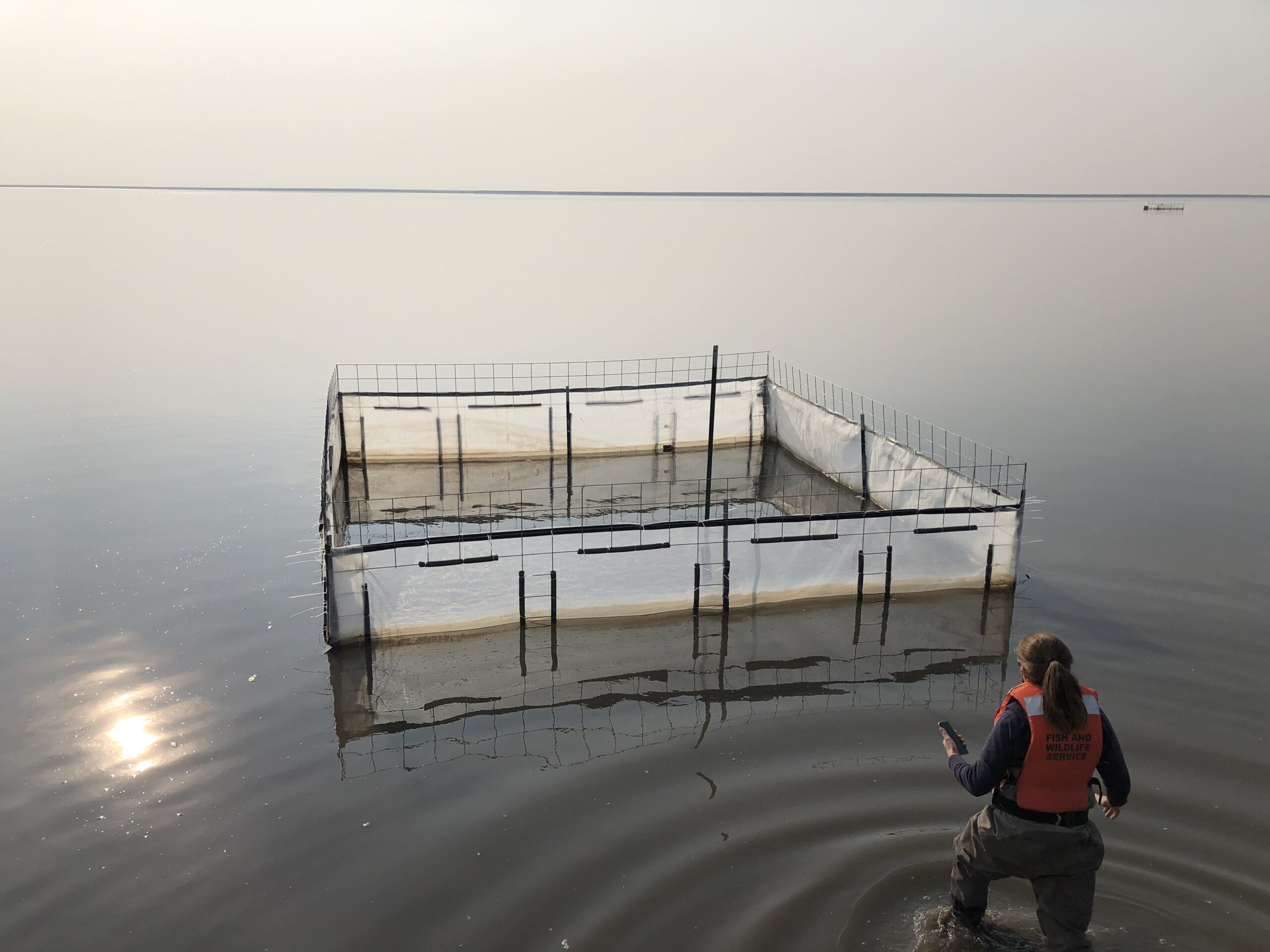 Vast lake is very still. Large box made of poles and canvas is constructed in the middle of the lake. A biologist stands next to it in knee deep water.