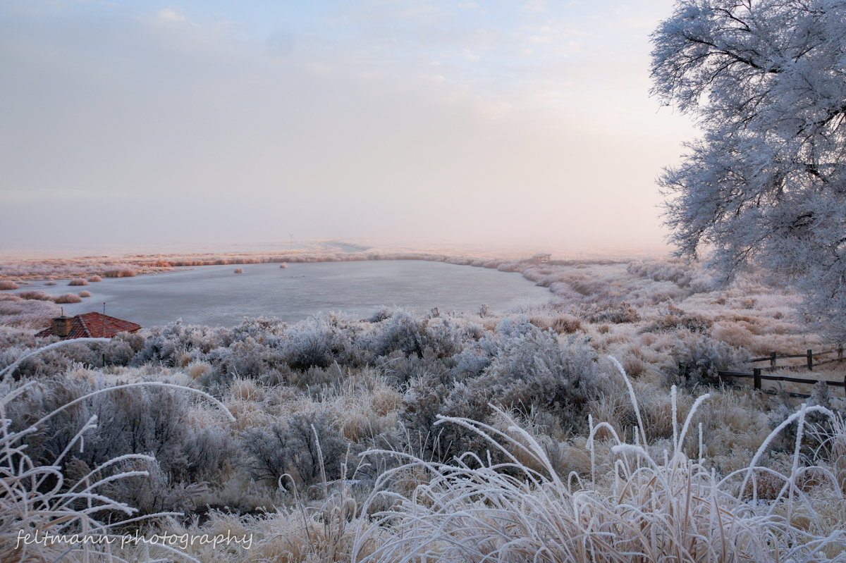Frozen pond in the distance with a tree and grasses all covered in frost.