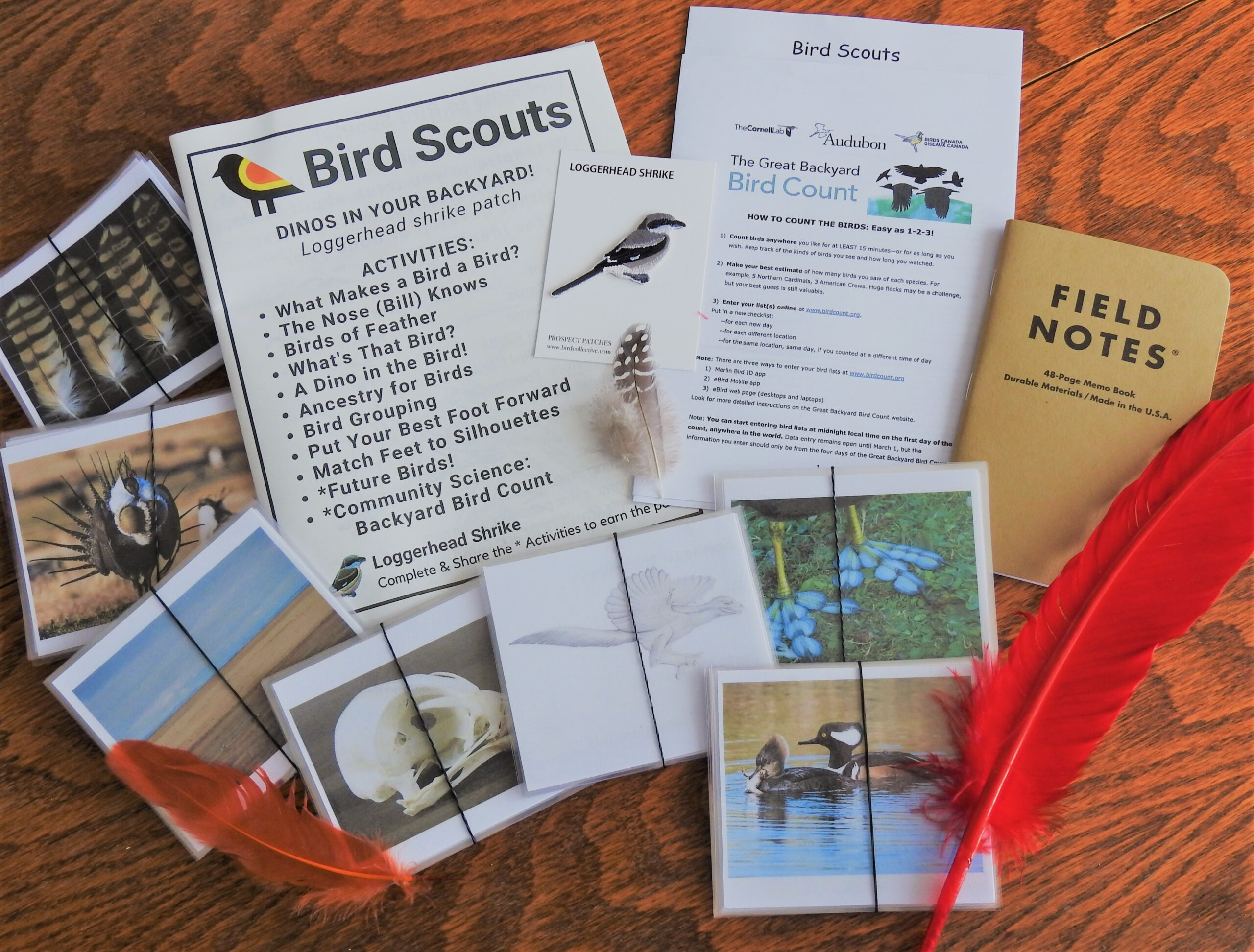 Dinos in your backyard activity packet includes booklets, feathers, and several sets of ID flashcardscards.